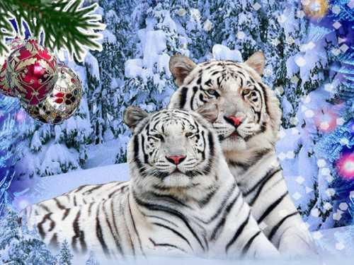 Что принесет нам Новый 2010 год Железного Тигра