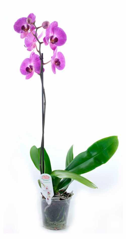 Одним из важных элементов в уходе за орхидеей