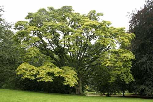 Ученые: экстракт пробкового дерева помогает в