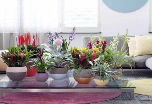 Фен шуй о растениях