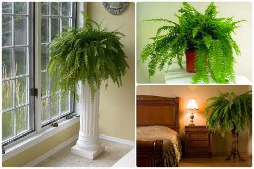 Как выбрать домашние растения