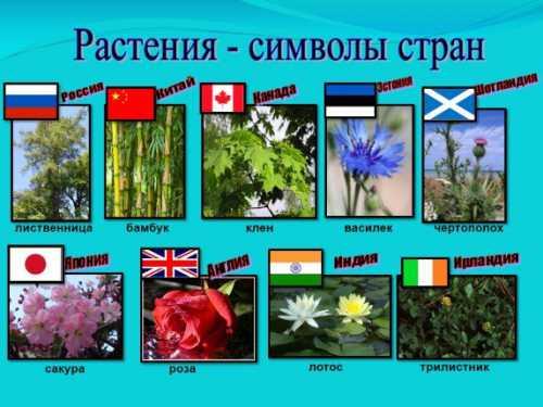Значение цветов и растений в разных странах мира