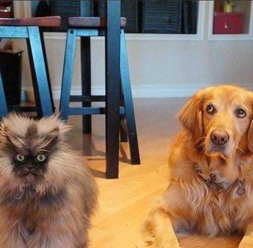 Этот кот явно чем